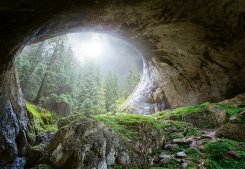 Cave In The Forest