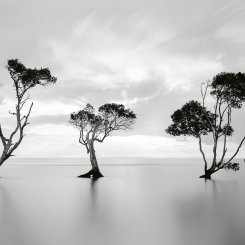 Trees In The Still Water