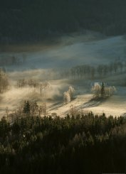 Frosty Forest With Dew