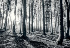 Forest Black & White