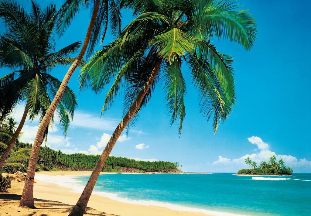 tropiska strand palmer nature. Black Bedroom Furniture Sets. Home Design Ideas